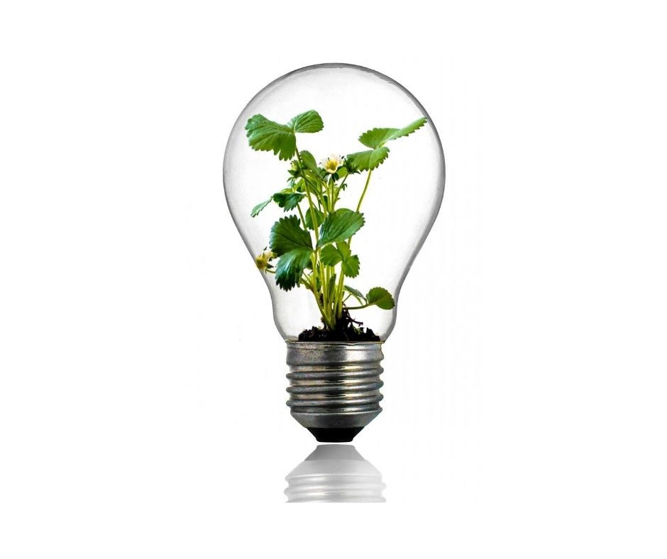Plant in lightbulb - SEO Specialist Perth