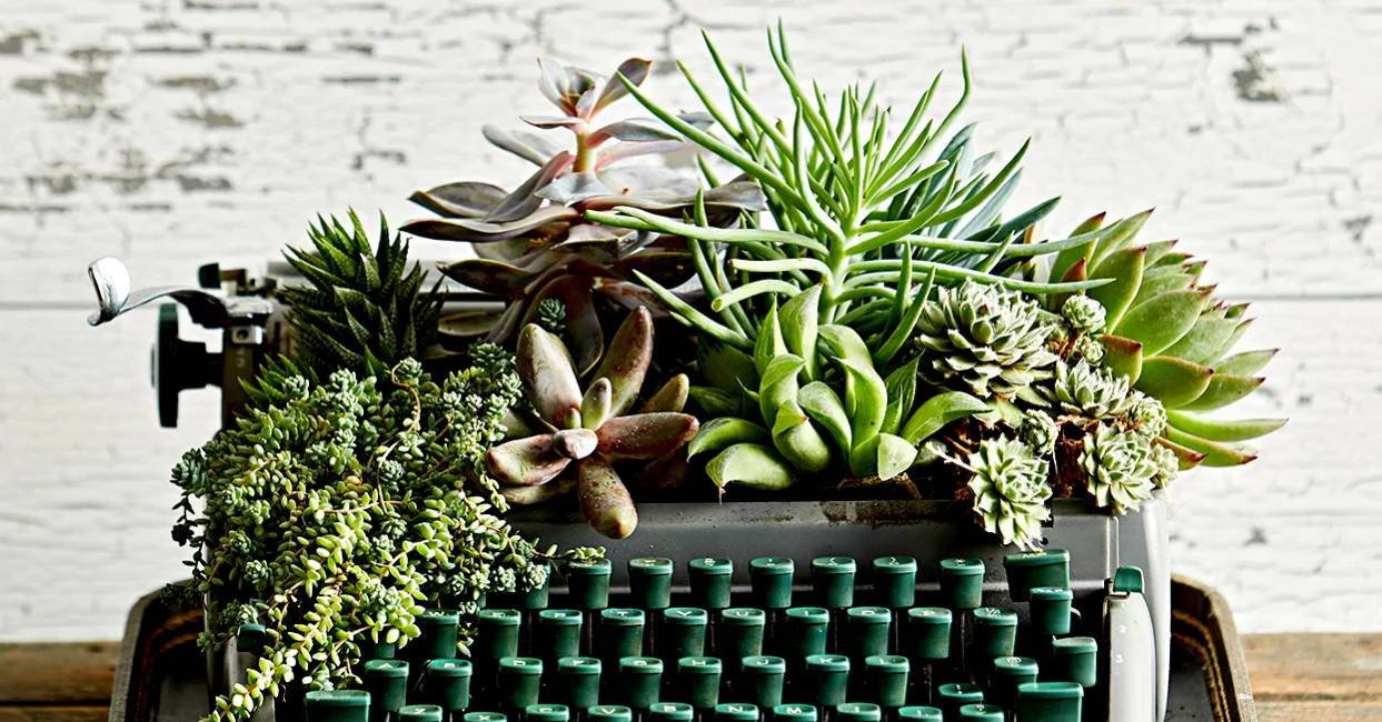 Typewriter With Succulents SEO Copywriting Perth Cover